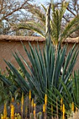 TAROUDANT, MOROCCO: DESIGNERS ARNAUD MAURIERES AND ERIC OSSART: AGAVE, CACTUS, CACTI, ARID, DRY, BORDERS, SUCCULENTS, GREEN, YELLOW FLOWERS OF ALOE VERA