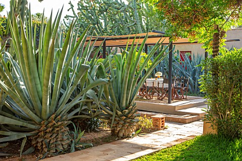 TAROUDANT_MOROCCO_DESIGNERS_ARNAUD_MAURIERES_AND_ERIC_OSSART_BED_OF_AGAVES_SUCCULENTS_DRY_ARID_GARDE