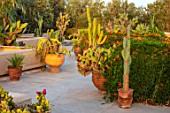 TAROUDANT, MOROCCO: DESIGNERS ARNAUD MAURIERES AND ERIC OSSART: ROOF GARDEN WITH CACTUS. CACTI, TERRCAE, PATIO, ROOF GARDENS, SUCCULENTS, APRIL, SUNRISE