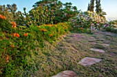 TAROUDANT, MOROCCO: DESIGNERS ARNAUD MAURIERES AND ERIC OSSART: STEPPING STONES ACROSS ROOF GARDEN, BOUGAINVILLEA, PENCIL CYPRESS, SUCCULENTS, SUNRISE, CUPRESSUS SEMPERVIRENS