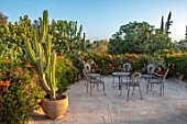 TAROUDANT, MOROCCO: DESIGNERS ARNAUD MAURIERES AND ERIC OSSART: ROOF GARDEN, TABLE, CHAIRS, CACTUS IN TERRACOTTA CONTAINER, GARDENS, APRIL, SUCCULENTS, CONCRETE, PATIO, TERRACE