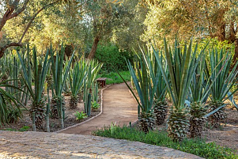 TAROUDANT_MOROCCO_DESIGNERS_ARNAUD_MAURIERES_AND_ERIC_OSSART_PATH_TERRACE_AGAVES_CLIPPED_SUCCULENTS_