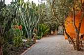 TAROUDANT, MOROCCO: DESIGNERS ARNAUD MAURIERES AND ERIC OSSART: DAR AL HOSSOUN - PATH, ORANGE WALL, DRY, ARID, GARDENS, COURTYARDS, AGAVES, OLIVE TREES, COURTYARD
