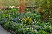 GRAVETYE MANOR SUSSEX: SPRING, APRIL, COUNTRY, GARDEN, BORDER BESIDE PATH WITH FORGET-ME-NOTS AND TULIPS