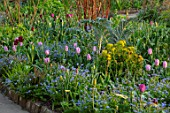 GRAVETYE MANOR SUSSEX: SPRING, APRIL, COUNTRY, GARDEN, BORDER BESIDE PATH WITH FORGET-ME-NOTS, TULIPS, EUPHORBIA AND CARDOON
