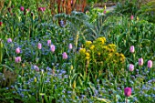 GRAVETYE MANOR SUSSEX: SPRING, APRIL, COUNTRY, GARDEN, BORDER BESIDE PATH WITH FORGET-ME-NOTS, EUPHORBIA, CARDOON, TULIPS