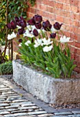 MORTON HALL, WORCESTERSHIRE: TULIPS IN STONE CONTAINER, APRIL, SPRING, BULBS. TULIPA CAFE NOIR AND MOUNT TACOMA