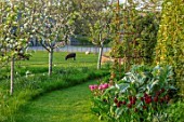 MORTON HALL, WORCESTERSHIRE: THE MEADOW AT SUNSET. FIELD WITH SHEEP, ORCHARD WITH APPLE TREES - MALUS SCRUMPTIOUS, MALUS EGREMONT RUSSET, CYDONIA CHAMPION, CARDOON, TULIPS