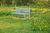 MORTON HALL, WORCESTERSHIRE: THE MEADOW AT SUNRISE. PATH, LAWN, WOODEN BENCH, YELLOW FLOWEWRS OF COWSLIPS, SPRING, MEADOWS, APRIL
