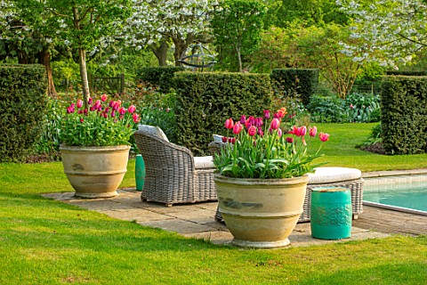 THE_OLD_VICARAGE_WORMLEIGHTON_WARWICKSHIRE_CONTAINERS_FILLED_WITH_TULIPS_SWIMMING_POOL_LOUNGERS_SPRI