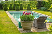 THE OLD VICARAGE, WORMLEIGHTON, WARWICKSHIRE: CONTAINERS FILLED WITH TULIPS, SWIMMING POOL. LOUNGERS, SPRING, APRIL, LAWN, TULIPA APRICOT IMPRESSION, JAN REUS, AYAAN, BURGUNDY