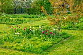 THE OLD VICARAGE, WORMLEIGHTON, WARWICKSHIRE: MEADOW WITH GRASS SQUARES, NATURALISTIC PLANTING OF TULIPS, NARCISSI, CAMASSIA, TULIP BURGUNDY AND BLACK JACK