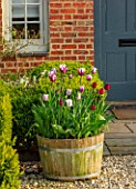 THE OLD VICARAGE, WORMLEIGHTON, WARWICKSHIRE: WOODEN TUBS, HALF BARREL, CONTAINERS PLANTED WITH TULIPS - TULIPA REMS FAVOURITE. BULBS, GRAVEL, COURTYARD, PATIO, FRONT DOOR
