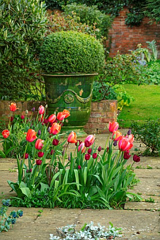 THE_OLD_VICARAGE_WORMLEIGHTON_WARWICKSHIRE_STONE_PATIO_TULIPSAPRICOT_IMPRESSION_JAN_REUS_BOX_BALLS_I