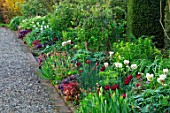 MORTON HALL, WORCESTERSHIRE: BORDER, TULIPS UNCLE TOM, FLAMING SPRING GREEN, PAEONIA MLOKOSEWITSCHII, HEUCHERA PLUM PUDDING, AUTUMN GLOW, GEUM OXFORD MARMALADE