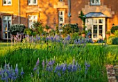 THE OLD VICARAGE, WORMLEIGHTON, WARWICKSHIRE: DESIGNER ANGEL COLLINS - HOUSE,  LAWN WITH CAMASSIA LEICHTLINII SUBSP. SUKSDORFII CAERULEA GROUP - BLUE, FLOWERS, MEADOW, SPRING