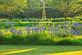 THE OLD VICARAGE, WORMLEIGHTON, WARWICKSHIRE: DESIGNER ANGEL COLLINS - LAWN WITH CAMASSIA CAERULEA AND TULIP QUEEN OF NIGHT - STEEL OBELISK BY DAVID HARBER. BLUE FLOWERS, MEADOW