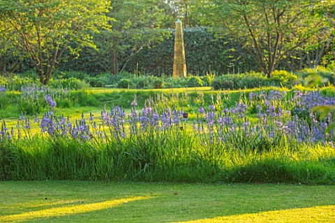 THE_OLD_VICARAGE_WORMLEIGHTON_WARWICKSHIRE_DESIGNER_ANGEL_COLLINS__LAWN_WITH_CAMASSIA_CAERULEA_AND_T