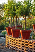 RADICEPURA GARDEN FESTIVAL, SICILY, ITALY: PROLIFILO INCONTRA CANDIDO GARDEN DESIGNED BY MARCO VOMIERO, ORANGE TREES IN CONTAINERS ON BRICK WALL