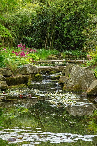 MORTON_HALL_WORCESTERSHIRE_CANDELABRA_PRIMULAS_BESIDE_THE_LOWER_POND_REFLECTIONS_APONOGETON_DISTACHY