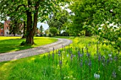 MORTON HALL, WORCESTERSHIRE: THE DRIVE, PARKLAND, MEADOW IN SPRING WITH WILDFLOWERS AND CAMASSIA LEICHTLINII CAERULEA