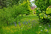MORTON HALL, WORCESTERSHIRE: THE DRIVE, PARKLAND, MEADOW IN SPRING WITH WILDFLOWERS AND CAMASSIA LEICHTLINII CAERULEA, ALLIUM PURPLE SENSATION