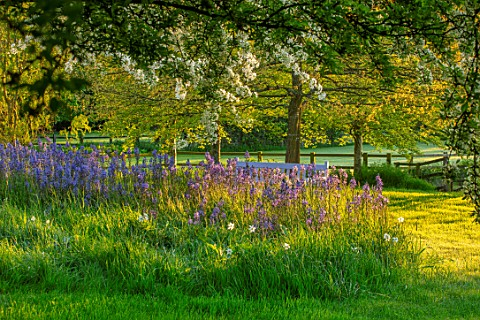 PETTIFERS_OXFORDSHIRE_DESIGNER_GINA_PRICE_CAMASSIA_LEICHTLINII_AND_WHITE__FLOWERS_OF_SPRING_BLOSSOM_