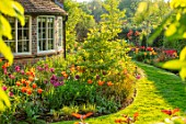 THE COACH HOUSE, SURREY, DESIGNER BARBARA BROOKS: LAWN, PATH, BORDERS WITH TULIPS, WALL, SPRING, GARDEN, TULIPA BALLERINA, HOLLYWOOD, NIGHTRIDER