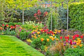 THE COACH HOUSE, SURREY, DESIGNER BARBARA BROOKS: LAWN, PATH, BORDERS WITH TULIPS, SPRING, GARDEN, TULIPA BALLERINA, HOLLYWOOD, NIGHTRIDER