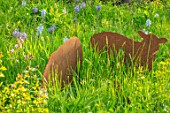 THE COACH HOUSE, SURREY, DESIGNER BARBARA BROOKS: MEADOW WITH RUSTY METAL CUT OUT SHEEP FROM MUNTONS PLANT SUPPORTS AND CAMASSIA. MEADOWS, WILDFLOWERS, ORNAMENTS