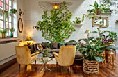 JAMIES JUNGLE, LONDON HOUSE OF JAMIE SONG: APARTMENT FILLED WITH HOUSEPLANTS. INDOORS, GREEN INTERIORS, FOLIAGE, SOFA, NEON POTHOS VINE, EPIPREMNUM AUREUM NEON, CLIMBER