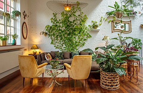 JAMIES_JUNGLE_LONDON_HOUSE_OF_JAMIE_SONG_APARTMENT_FILLED_WITH_HOUSEPLANTS_INDOORS_GREEN_INTERIORS_F