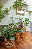 JAMIES JUNGLE, LONDON HOUSE OF JAMIE SONG: APARTMENT FILLED WITH HOUSEPLANTS. INDOORS, GREEN INTERIORS, FOLIAGE