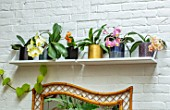 JAMIES JUNGLE, LONDON HOUSE OF JAMIE SONG: APARTMENT FILLED WITH HOUSEPLANTS. INDOORS, GREEN INTERIORS, PHALAEONOPSIS ORCHIDS IN CONTAINERS ON SHELF