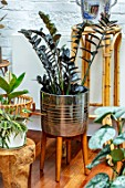 JAMIES JUNGLE, LONDON HOUSE OF JAMIE SONG: APARTMENT FILLED WITH HOUSEPLANTS. INDOORS, GREEN INTERIORS, WOODEN STAND, SILVER CONTAINER, ZAMIOCULCAS ZAMIIFOLIA RAVEN
