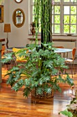 JAMIES JUNGLE, LONDON HOUSE OF JAMIE SONG: APARTMENT FILLED WITH HOUSEPLANTS. INDOORS, GREEN INTERIORS, PHILODENDRON HAUMATOPHYLLUM XANADU