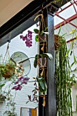 JAMIES JUNGLE, LONDON HOUSE OF JAMIE SONG: APARTMENT FILLED WITH HOUSEPLANTS. INDOORS, GREEN INTERIORS,  PHALAEONOPSIS ORCHIDS IN CONTAINERS ON GIRDER, HANGING