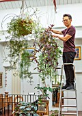 JAMIES JUNGLE, LONDON HOUSE OF JAMIE SONG: APARTMENT FILLED WITH HOUSEPLANTS. INDOORS, GREEN INTERIORS,  JAMIE SONG WATERING ON LADDER