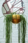 JAMIES JUNGLE, LONDON HOUSE OF JAMIE SONG: HOUSEPLANTS. INDOORS, GREEN INTERIORS, HANGING GOLD CONTAINER WITH HOYA LINEARIS, WAX FLOWER, PLANT