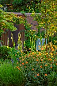 DESIGNER JAMES SCOTT, THE GARDEN COMPANY: AMELANCHIER X GRANDIFLORA ROBIN HILL, GEUM TOTALLY TANGERINE, IRIS JANE PHILLIPS, BORDERS, PLANT ASSOCIATIONS