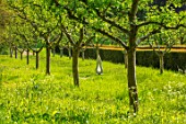 PAINSWICK ROCOCO GARDEN, GLOUCESTERSHIRE: ART UNBOUND: FRUIT TREES, SCULPTURE SHARP DART OF LONGING BY LUKE DICKINSON
