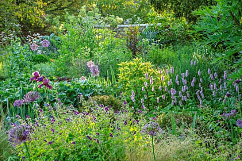 PETRA_HOYER_MILLAR_GARDEN_OXFORDSHIRE_CASTLE_END_HOUSE_BORDER_ALLIUM_CHRISTOPHII_GERANIUM_PHAEUM_RAV