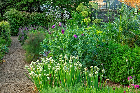 PETRA_HOYER_MILLAR_GARDEN_OXFORDSHIRE_CASTLE_END_HOUSE_HERB_GARDEN_PATH_ALLIUM_FISTULOSUM_POPPIES_PA