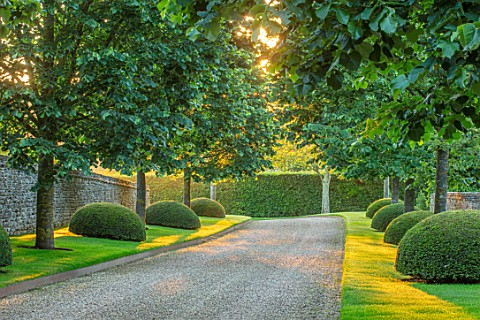 WINSON_MANOR_GLOUCESTERSHIRE_MAIN_AVENUE_IN_MORNING_SILVER_LIMES_TILIA_TOMENTOSA_TOPIARY_YEW_CLIPPED