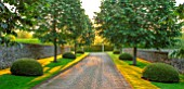 WINSON MANOR, GLOUCESTERSHIRE: MAIN AVENUE IN MORNING, SILVER LIMES, TILIA TOMENTOSA, TOPIARY YEW CLIPPED TOPIARY DOMES, SUMMER, ENGLISH, COUNTRY, GARDENS