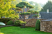 WINSON MANOR, GLOUCESTERSHIRE: LAWN, WALL, CLIPPED TOPIARY CLOUD PRUNED SCOTS PINE - PINUS SYLVESTRIS, TREES, SUMMER, GREEN, GARDENS