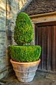 WINSON MANOR, GLOUCESTERSHIRE: TERRACOTTA CONTAINER, WALL, CLIPPED TOPIARY BOX, BUXUS, SUMMER, GREEN, GARDENS