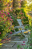 MANOR FARM, CHESHIRE: THE LONG TERRACE - ROSES - ROSA BURGUNDY ICE, WOODEN SEATS, PLEACHED HAWTHORNS IN BACKGROUND, PATIO, SUNRISE