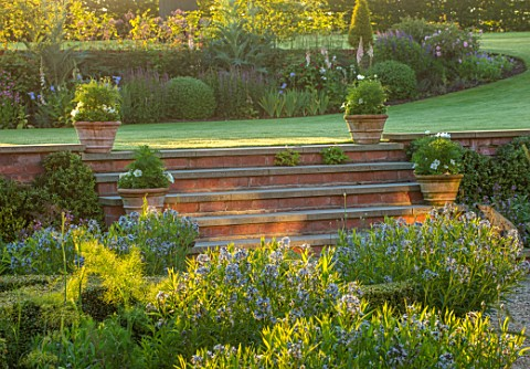 MANOR_FARM_CHESHIRE_THE_FORMAL_HERB_GARDEN_STEPS_TERRACOTTA_CONTAINERS_LAWN_AMSONIA_SALICIFOLIA_ENGL