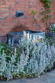 MANOR FARM, CHESHIRE: LAWN, PATH, WATER FEATURE, STACHYS LANATA, GREY, SILVER, PLANTING